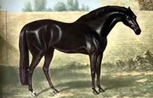 The Godolphin Arabian by Stubbs