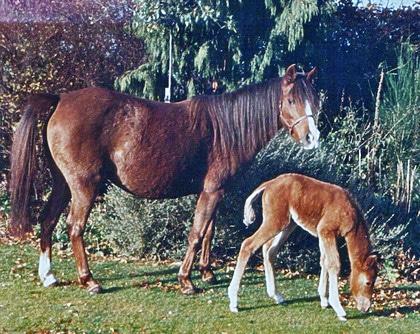 Khorshid Kola, Caspian Horse mare