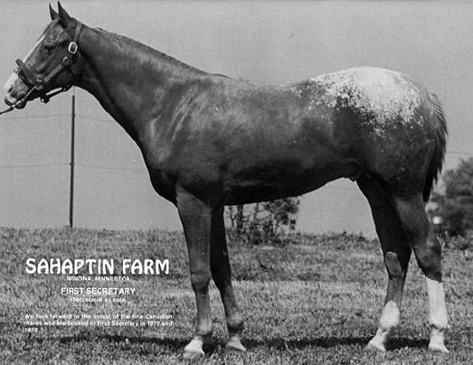 Secretariat's First Foal Had Spots!