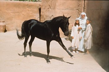 Scene from Young Black Stallion