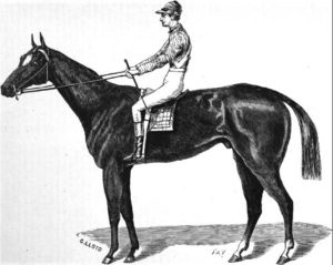 Aristides Thoroughbred horse