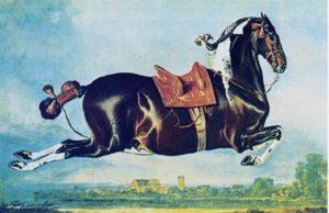 Spanish haute école horse