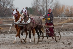 Modern chariot racing