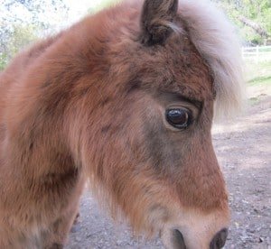 Closeup of a pony