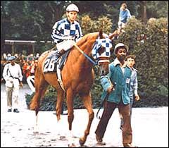 Secretariat Thoroughbred horse