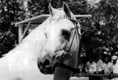 The Stallion Who Helped the Communists Become Capitalists