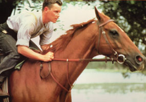 Towering Inferno portraying Phar Lap with Tom Burlinson