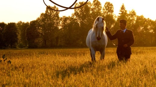 More *Witez II and A New Film About Polish Arabians