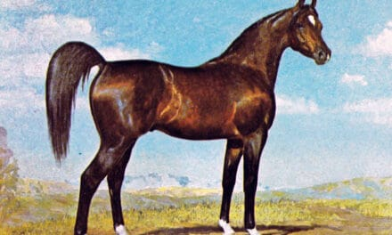 A Real-Life War Horse: *Witez II's Journey Into History