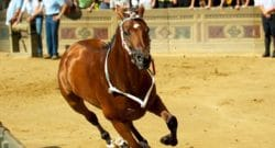 What is Il Palio?