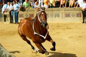 Loose horse during Il Palio