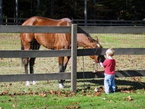 Maggies Charm Thoroughbred horse