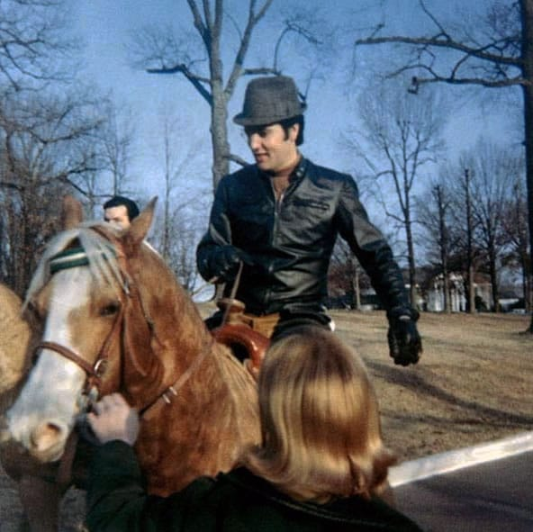 Elvis and the Horses of Graceland