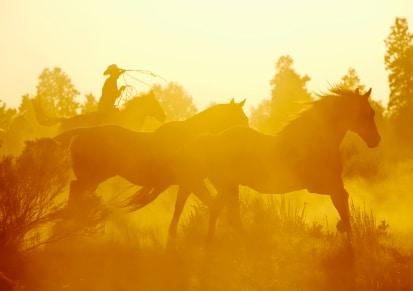 The Great Mystery of the Horse-Human Connection
