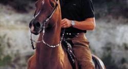 Celebrities & Horses: William Shatner, Queen Elizabeth II & Patrick Swayze