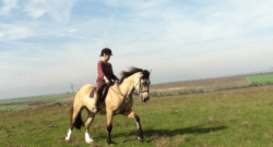 Confidence Creation with Horses & Beyond