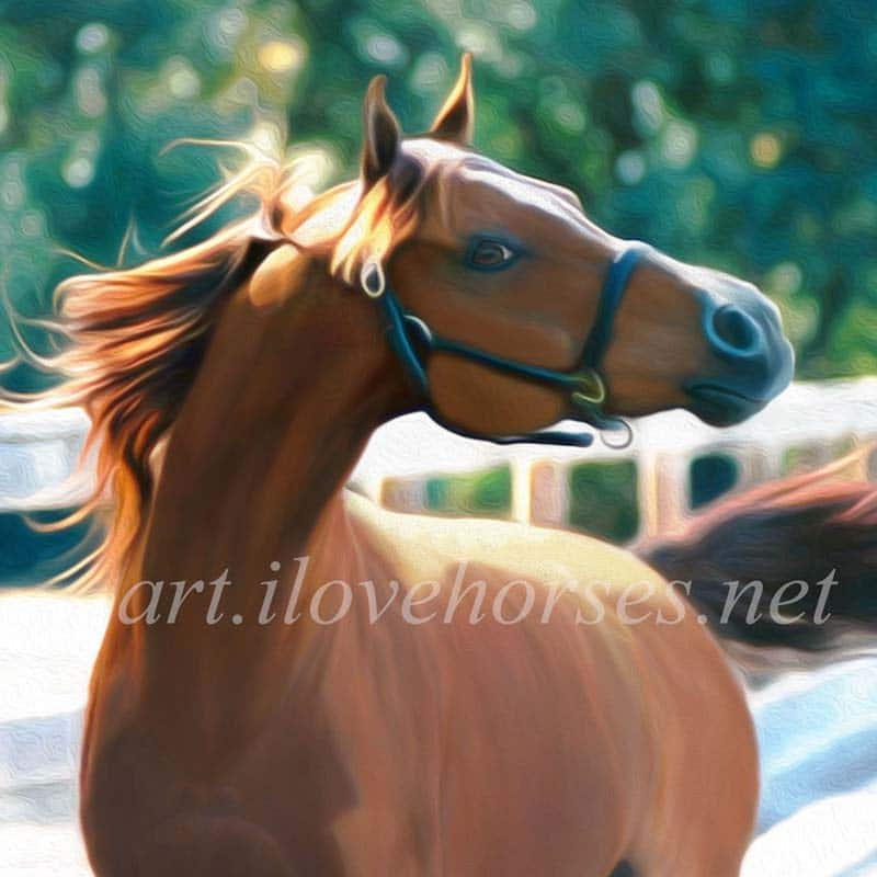 Equine Fine Art You Can't Find Anywhere Else! art.ilovehorses.net