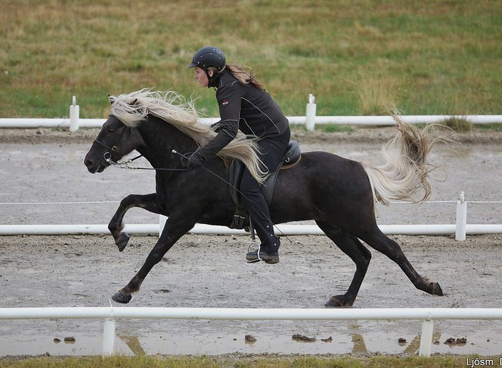 What horse breeds carry the silver dapple gene? Photo gallery!